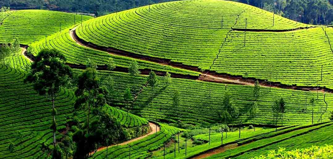 Car Rentals  Bangalore To Ooty tour packages